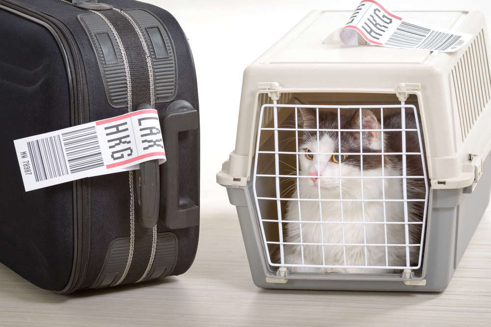 El transporte de animales por avión